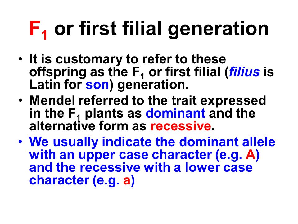 F1 or first filial generation