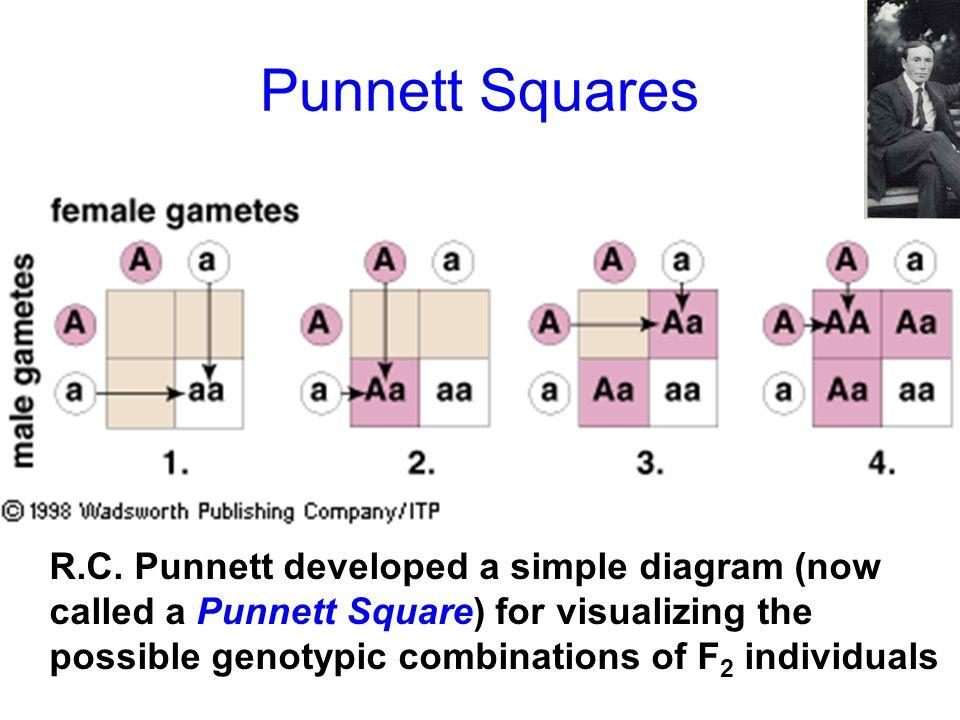 Punnett Squares ,