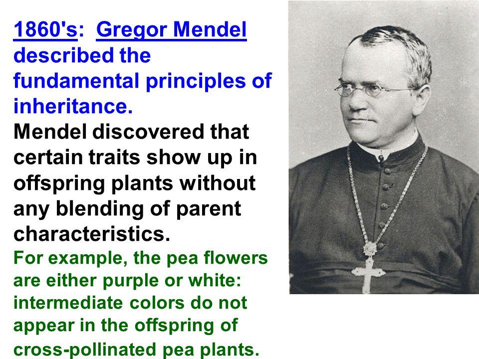 1860 s: Gregor Mendel described the fundamental principles of inheritance.