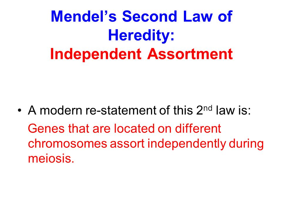 Mendel's Second Law of Heredity: Independent Assortment