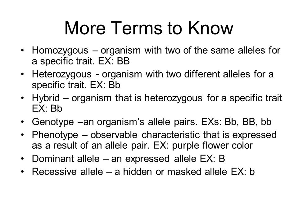 More Terms to Know Homozygous – organism with two of the same alleles for a specific trait. EX: BB.