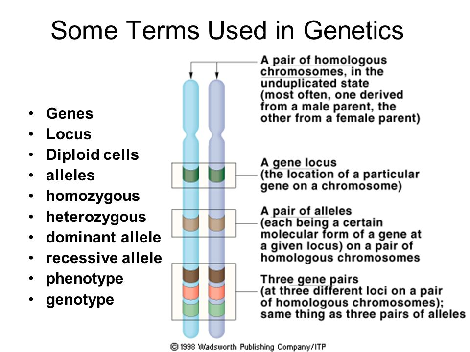 Some Terms Used in Genetics