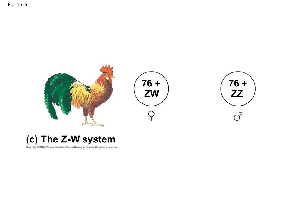 (c) The Z-W system 76 + ZW 76 + ZZ Fig. 15-6c