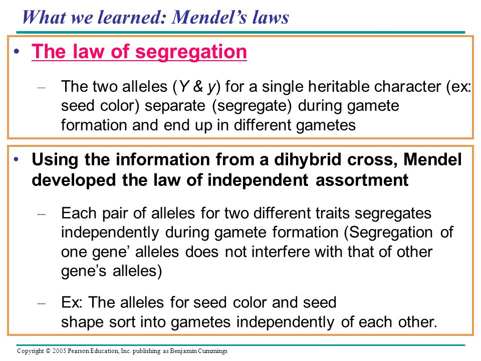 What we learned: Mendel's laws