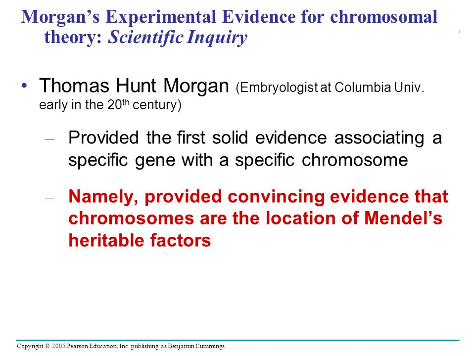Morgan's Experimental Evidence for chromosomal theory: Scientific Inquiry