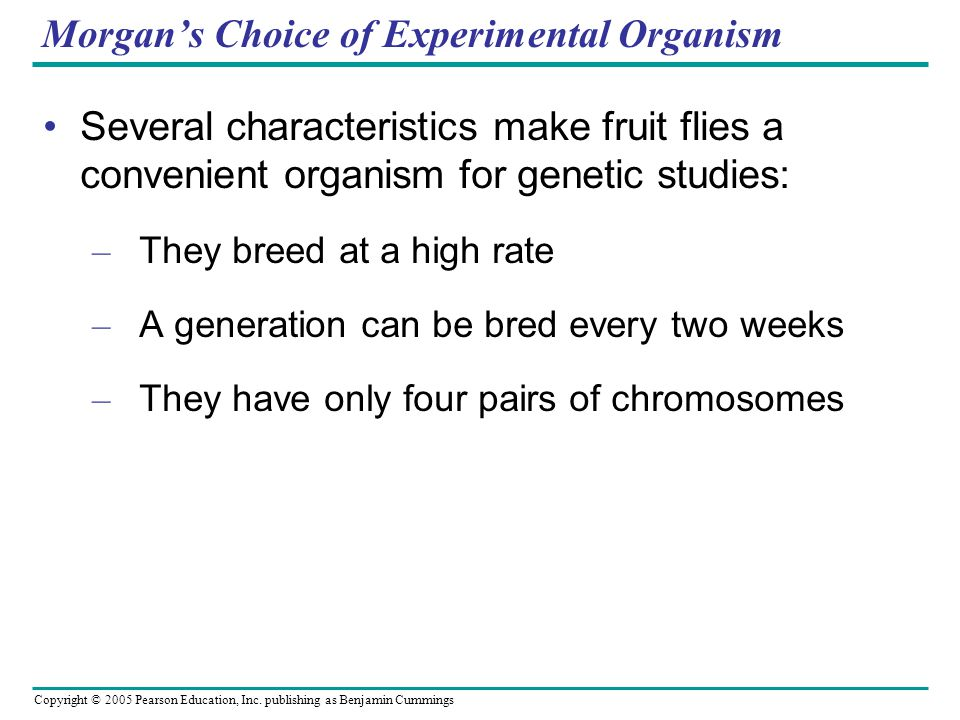 Morgan's Choice of Experimental Organism