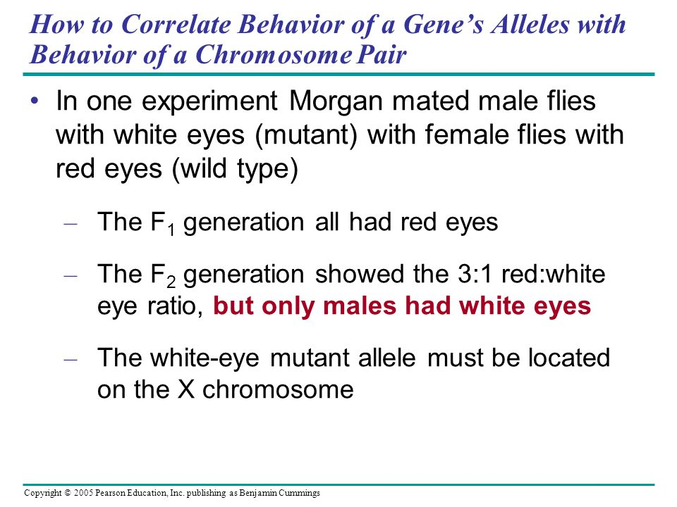 How to Correlate Behavior of a Gene's Alleles with Behavior of a Chromosome Pair