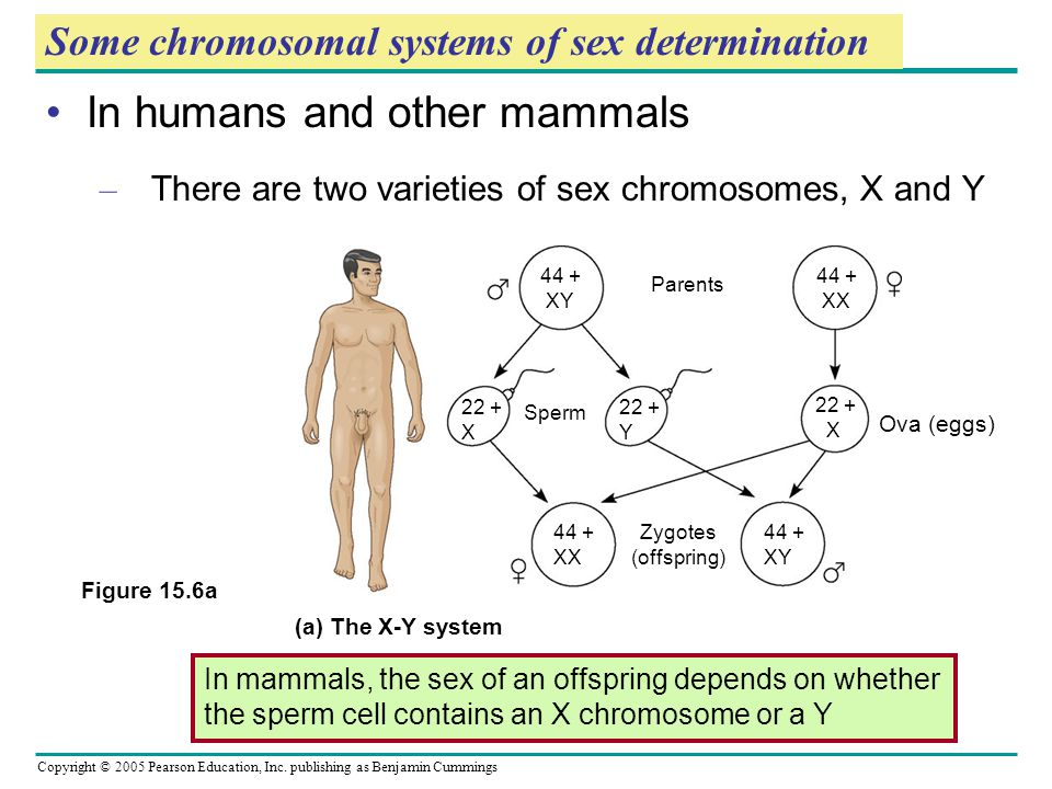 Some chromosomal systems of sex determination