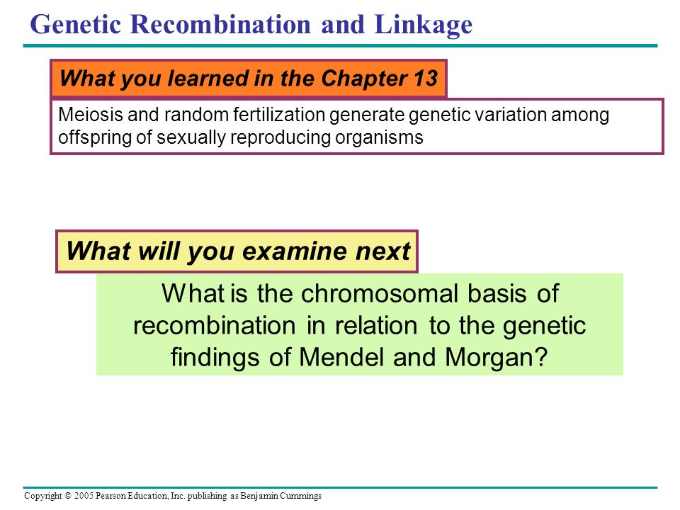 genetic recombination in sexually reproductive organisms Different alleles (slight differences in the genetic code) are the main cause genetic variation what two processes cause variation to occur sexual reproduction and mutation.