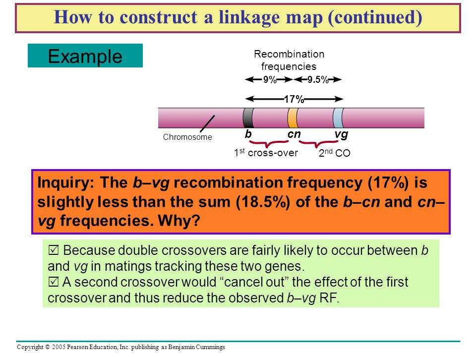 How to construct a linkage map (continued)