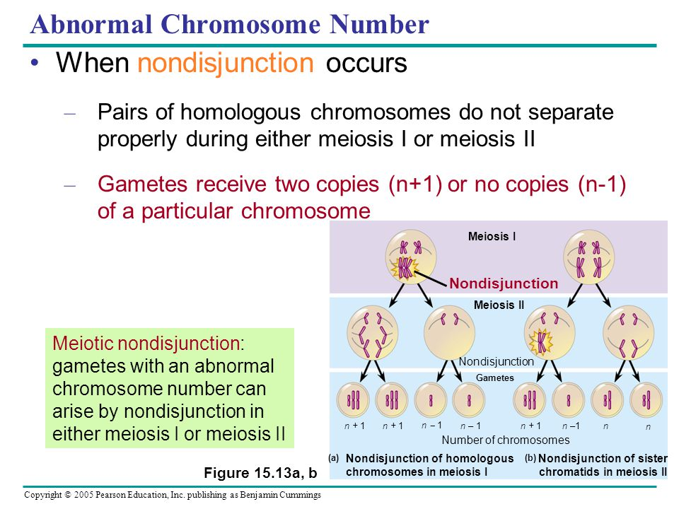 Abnormal Chromosome Number