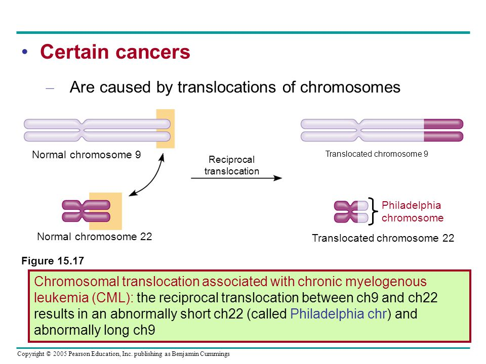 Certain cancers Are caused by translocations of chromosomes