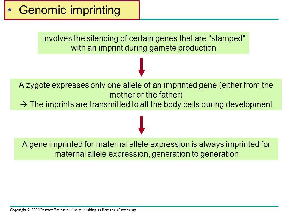Genomic imprinting Involves the silencing of certain genes that are stamped with an imprint during gamete production.
