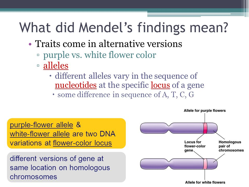 What did Mendel's findings mean