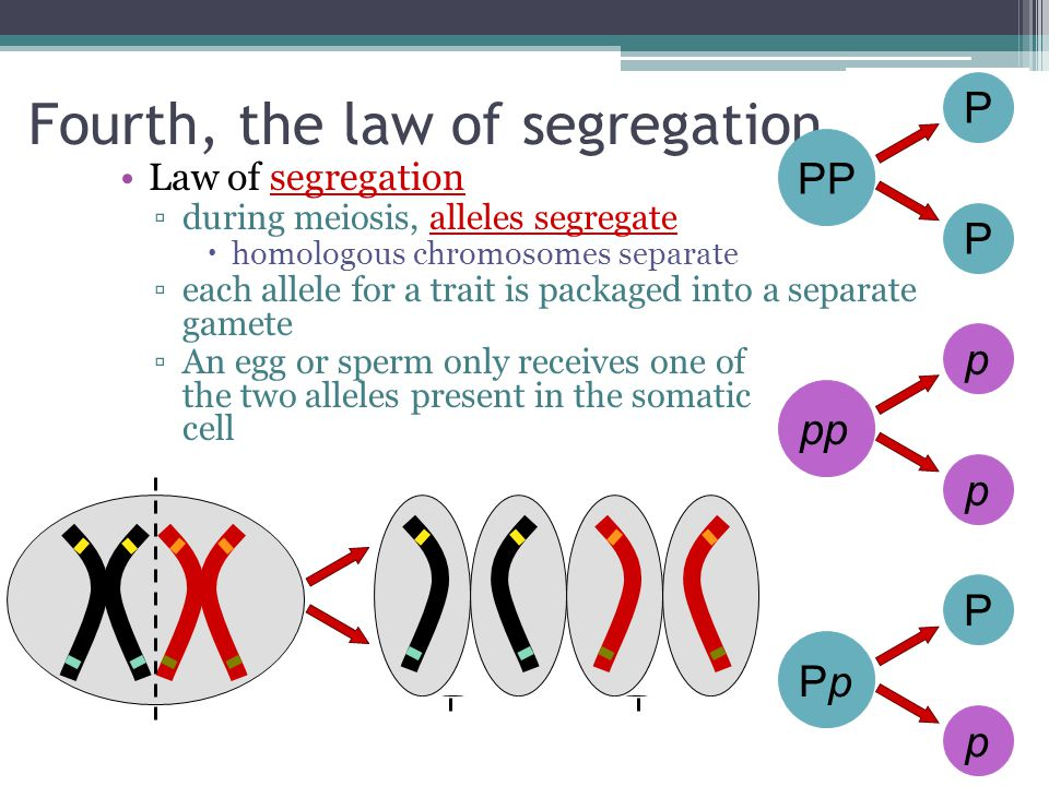 Fourth, the law of segregation