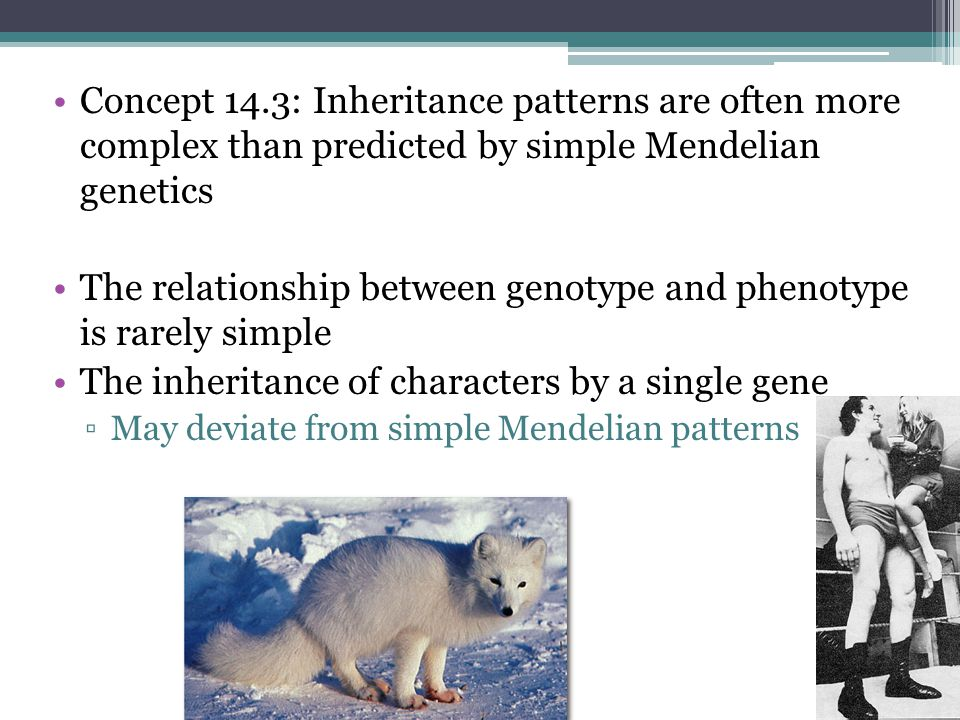 The relationship between genotype and phenotype is rarely simple