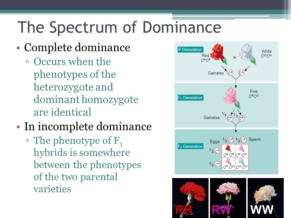 The Spectrum of Dominance