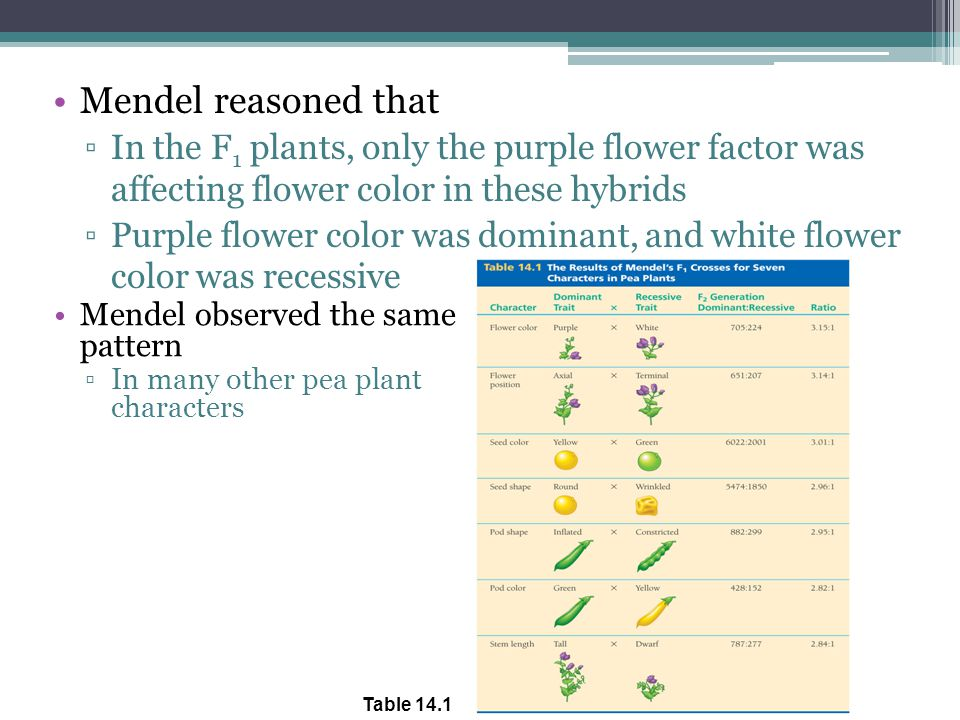 Mendel reasoned that In the F1 plants, only the purple flower factor was affecting flower color in these hybrids.