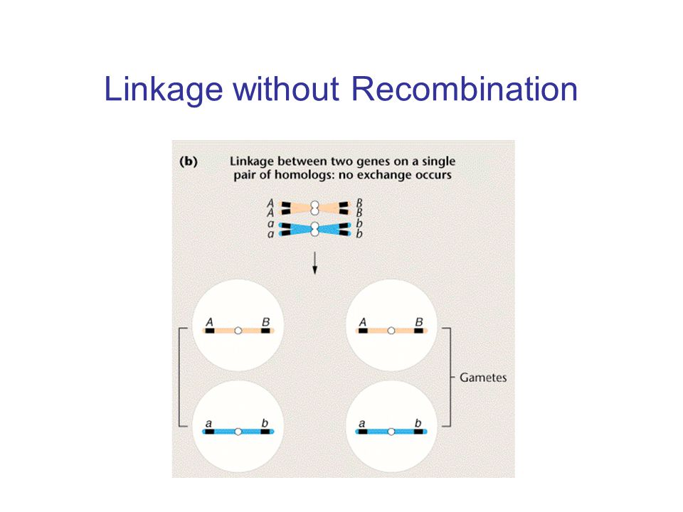 Linkage without Recombination
