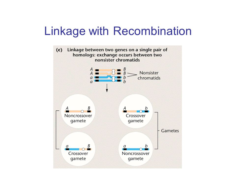 Linkage with Recombination