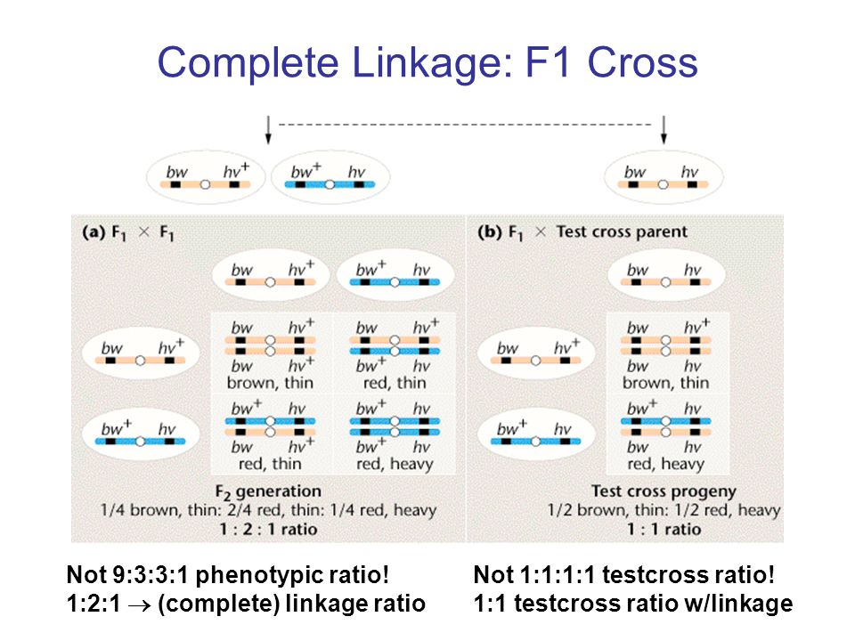 Complete Linkage: F1 Cross