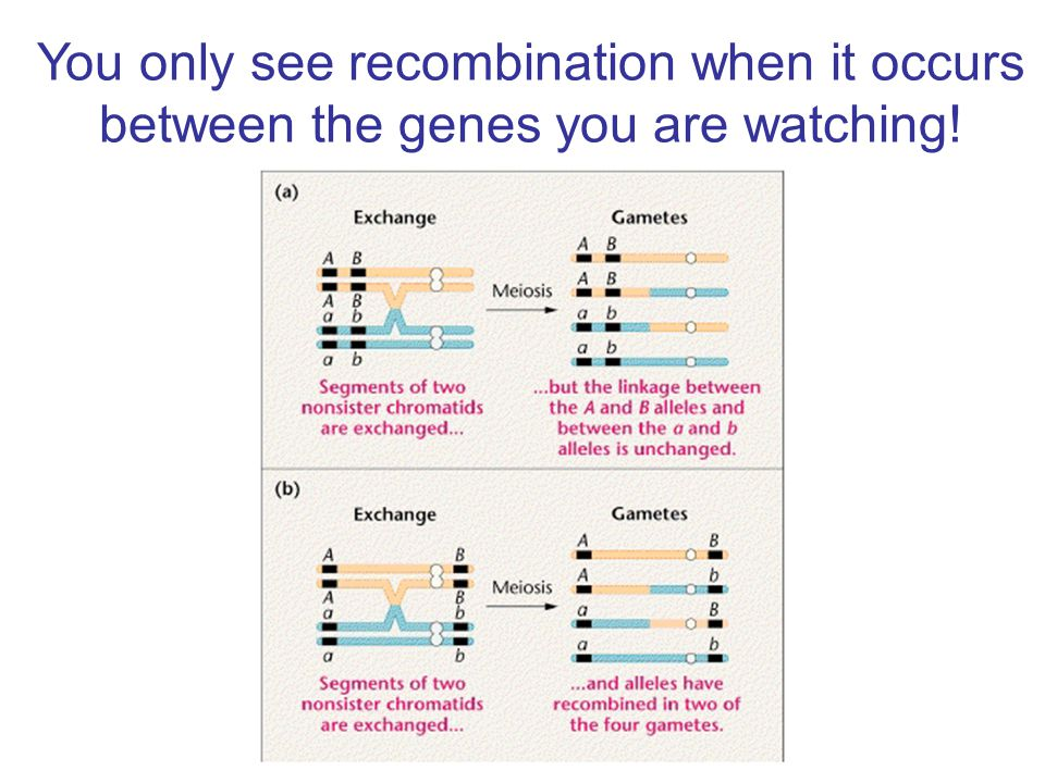 You only see recombination when it occurs between the genes you are watching!