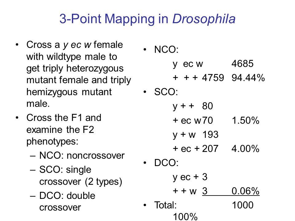 3-Point Mapping in Drosophila