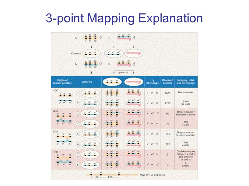 3-point Mapping Explanation