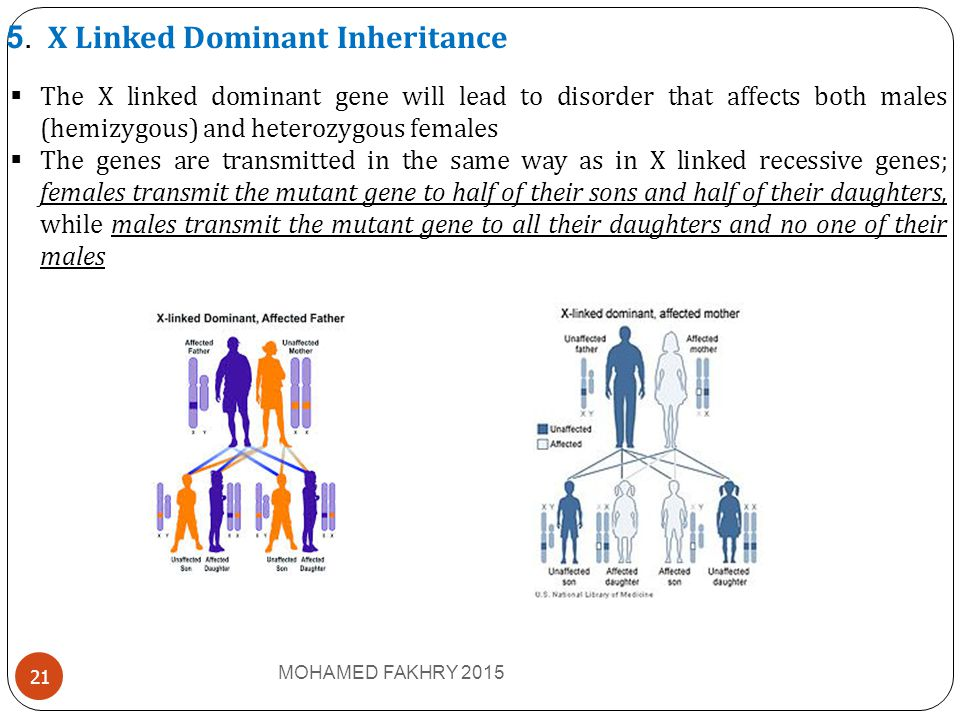 5. X Linked Dominant Inheritance