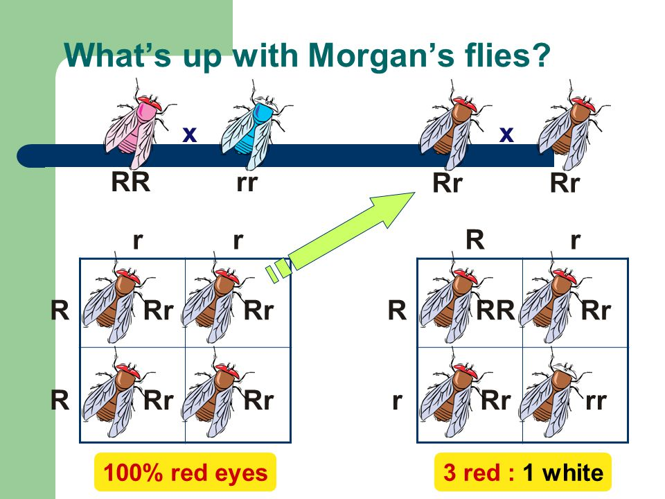 What's up with Morgan's flies