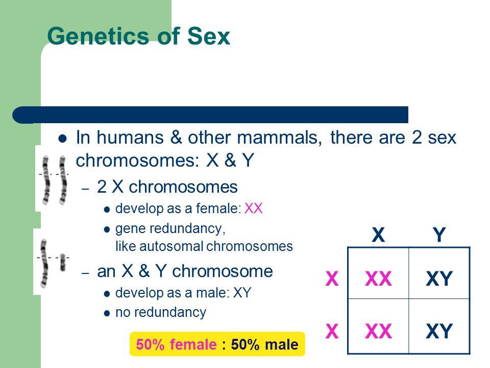 Genetics of Sex X Y X XX XY X XX XY