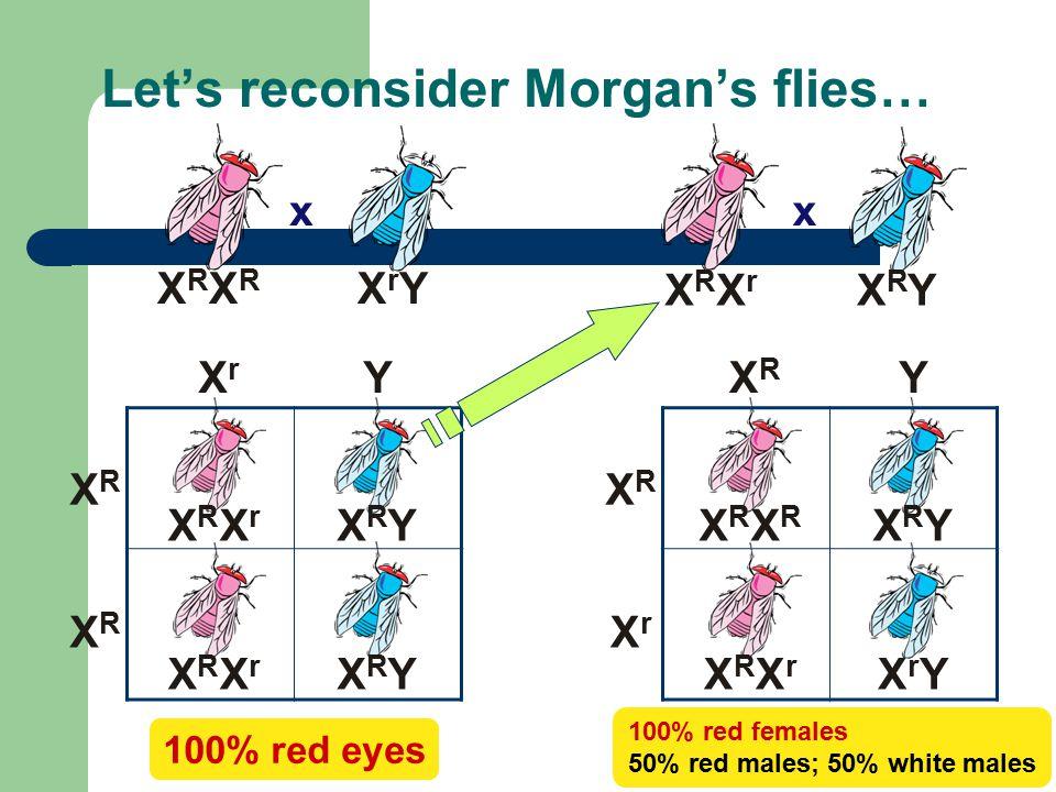 Let's reconsider Morgan's flies…