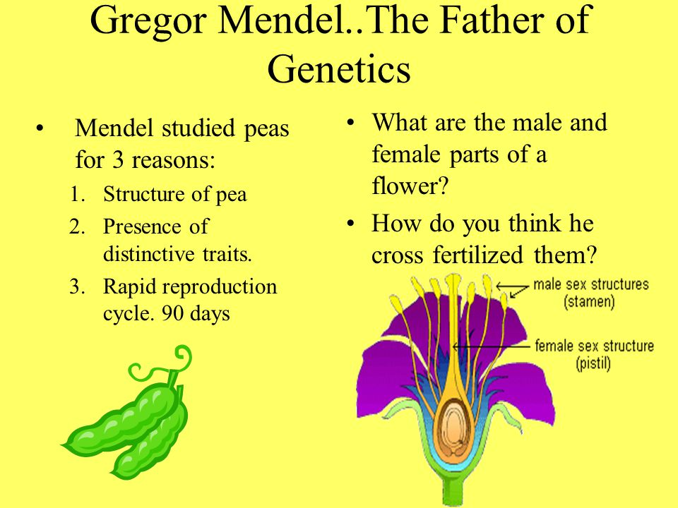Gregor Mendel..The Father of Genetics