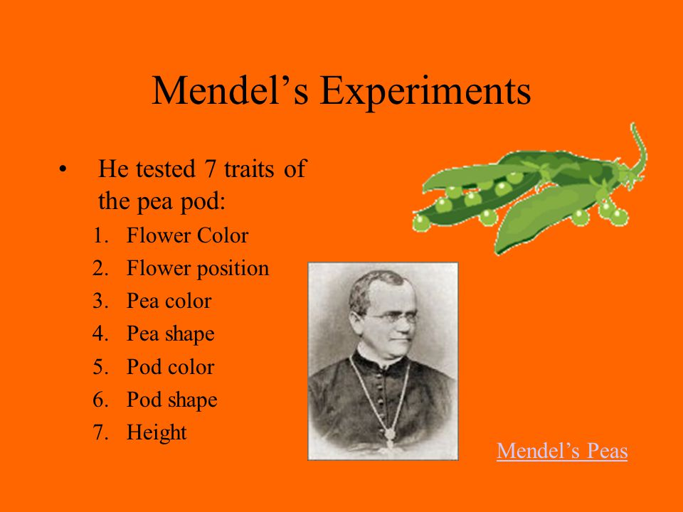 Mendel's Experiments He tested 7 traits of the pea pod: Flower Color