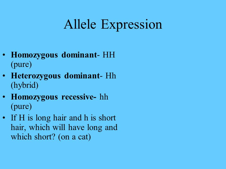 Allele Expression Homozygous dominant- HH (pure)