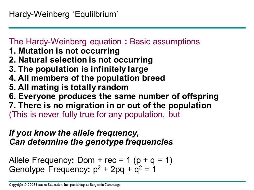 Hardy-Weinberg 'Equlilbrium' The Hardy-Weinberg equation : Basic assumptions 1. Mutation is not occurring 2. Natural selection is not occurring 3. The population is infinitely large 4. All members of the population breed 5. All mating is totally random 6. Everyone produces the same number of offspring 7.