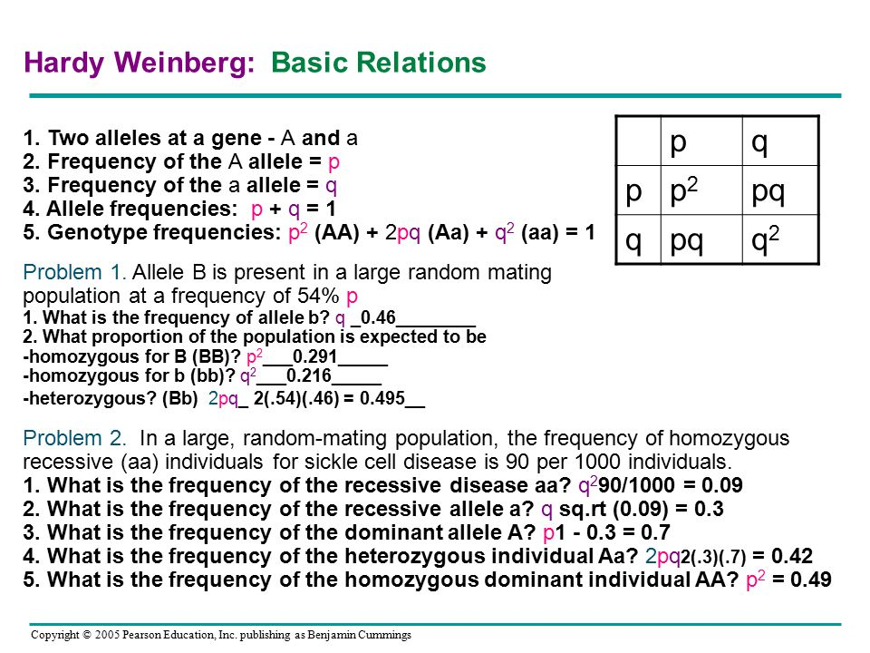 Hardy Weinberg: Basic Relations 1. Two alleles at a gene - A and a 2