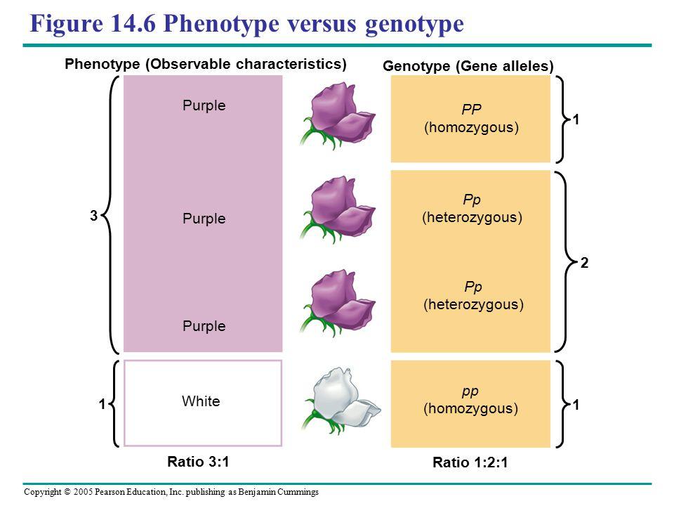 Figure 14.6 Phenotype versus genotype
