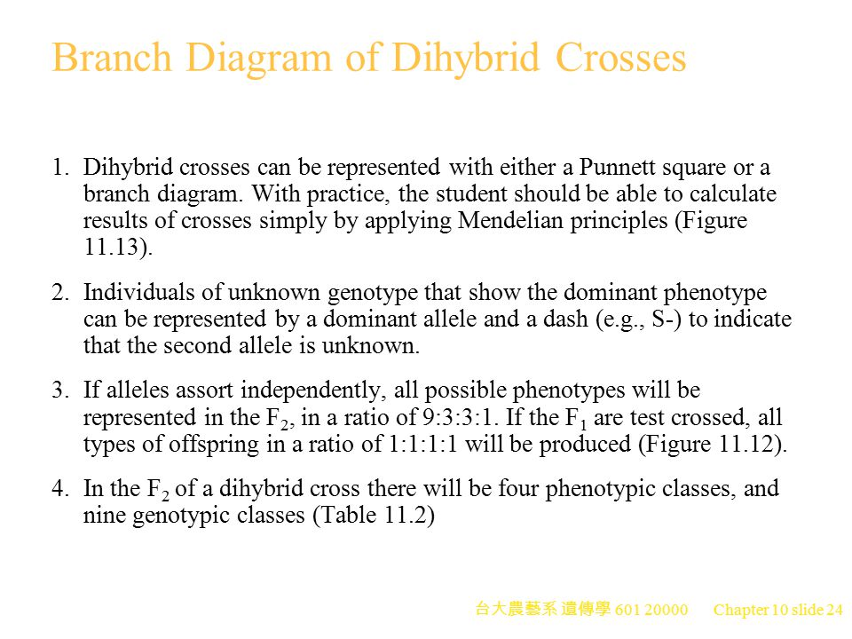 Branch Diagram of Dihybrid Crosses