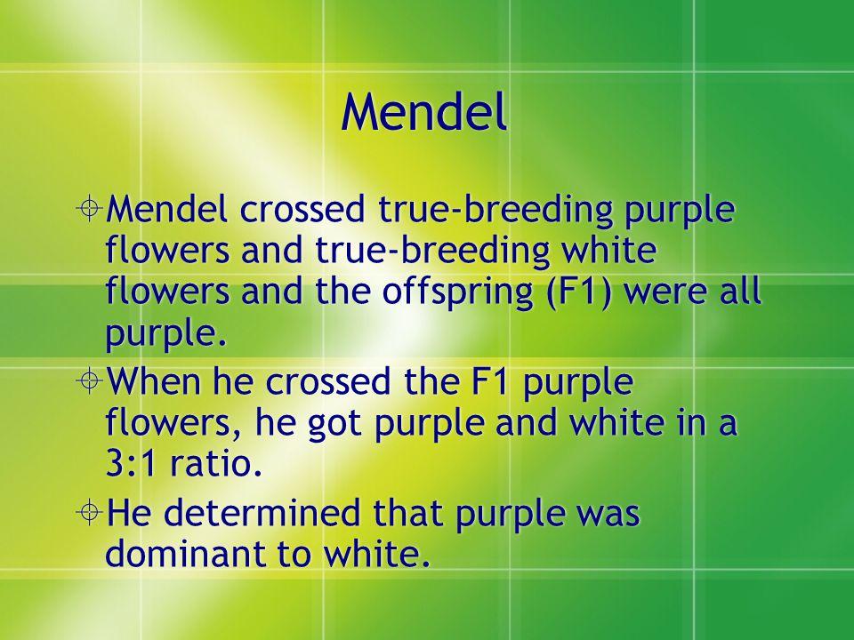 Mendel Mendel crossed true-breeding purple flowers and true-breeding white flowers and the offspring (F1) were all purple.