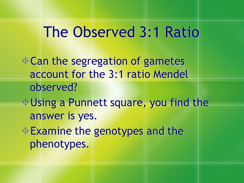 The Observed 3:1 Ratio Can the segregation of gametes account for the 3:1 ratio Mendel observed