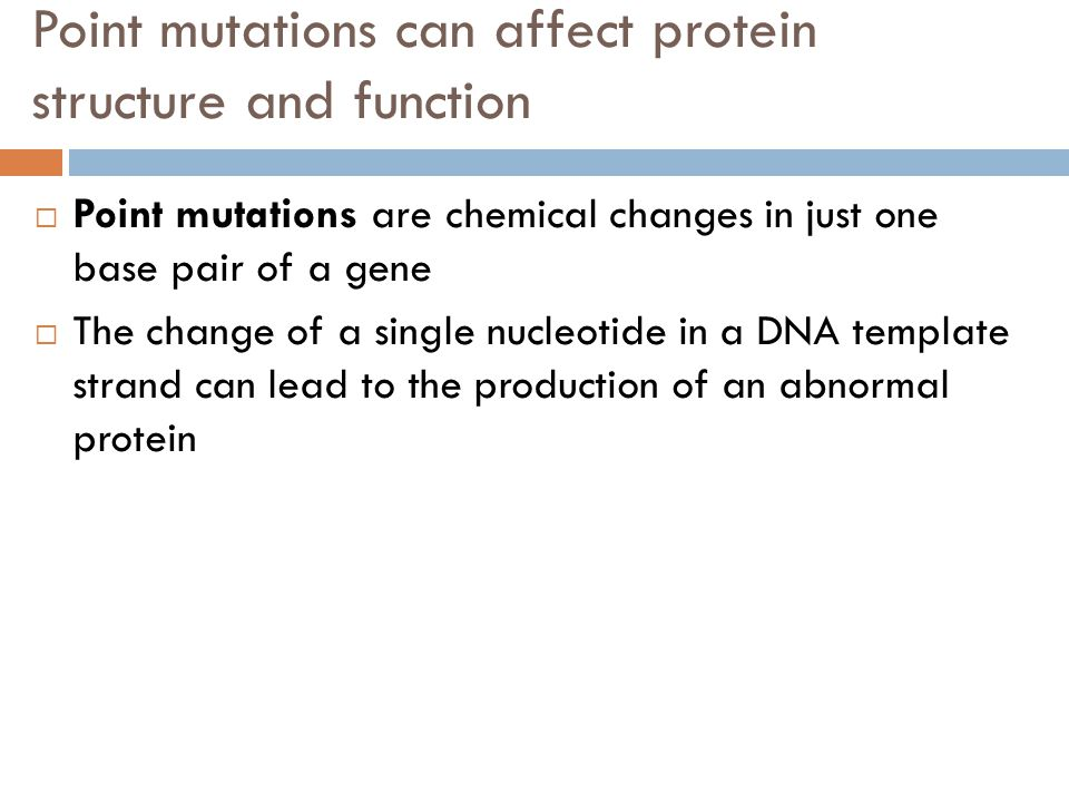 Point mutations can affect protein structure and function