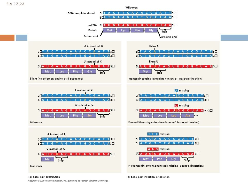 Figure 17.23 Types of point mutations