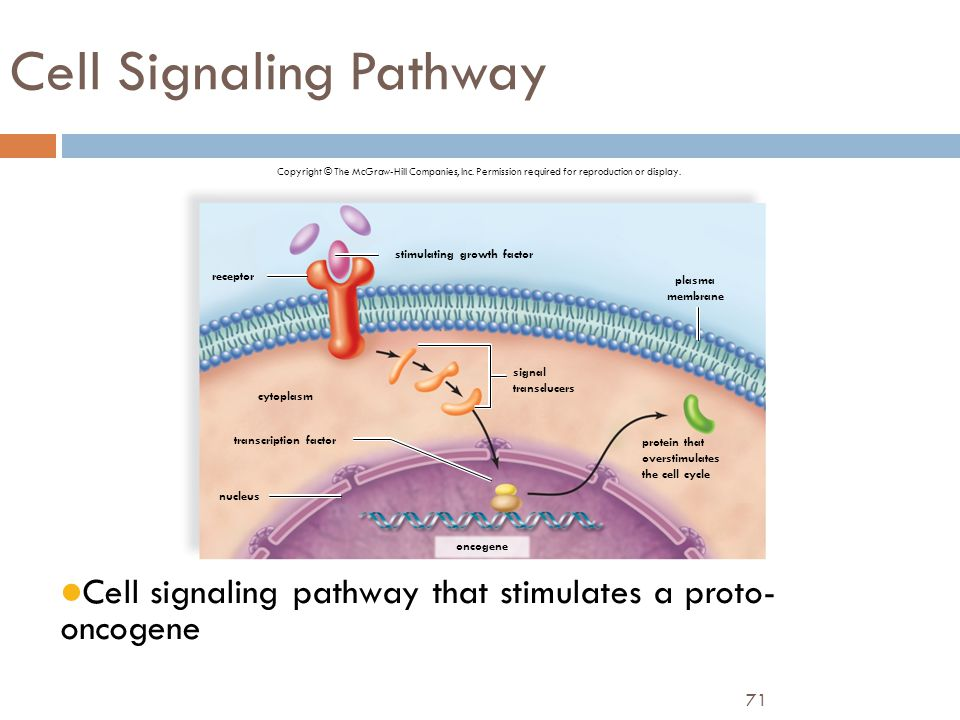 Cell Signaling Pathway
