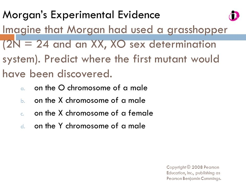 Morgan's Experimental Evidence Imagine that Morgan had used a grasshopper (2N = 24 and an XX, XO sex determination system). Predict where the first mutant would have been discovered.