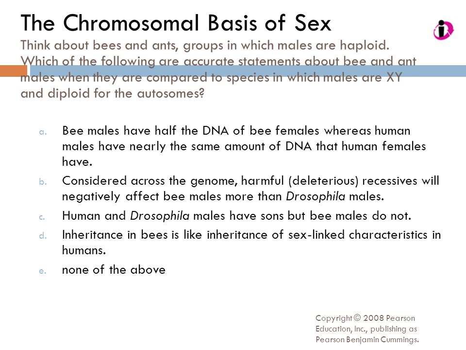 The Chromosomal Basis of Sex Think about bees and ants, groups in which males are haploid. Which of the following are accurate statements about bee and ant males when they are compared to species in which males are XY and diploid for the autosomes