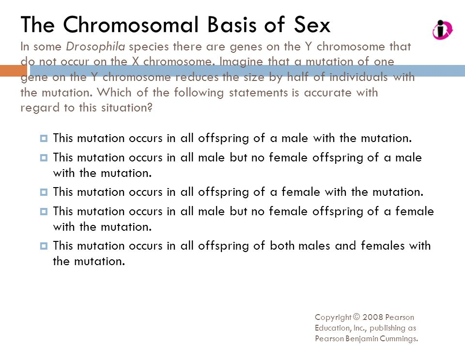 The Chromosomal Basis of Sex In some Drosophila species there are genes on the Y chromosome that do not occur on the X chromosome. Imagine that a mutation of one gene on the Y chromosome reduces the size by half of individuals with the mutation. Which of the following statements is accurate with regard to this situation