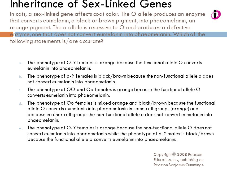 Inheritance of Sex-Linked Genes In cats, a sex-linked gene affects coat color. The O allele produces an enzyme that converts eumelanin, a black or brown pigment, into phaeomelanin, an orange pigment. The o allele is recessive to O and produces a defective enzyme, one that does not convert eumelanin into phaeomelanin. Which of the following statements is/are accurate