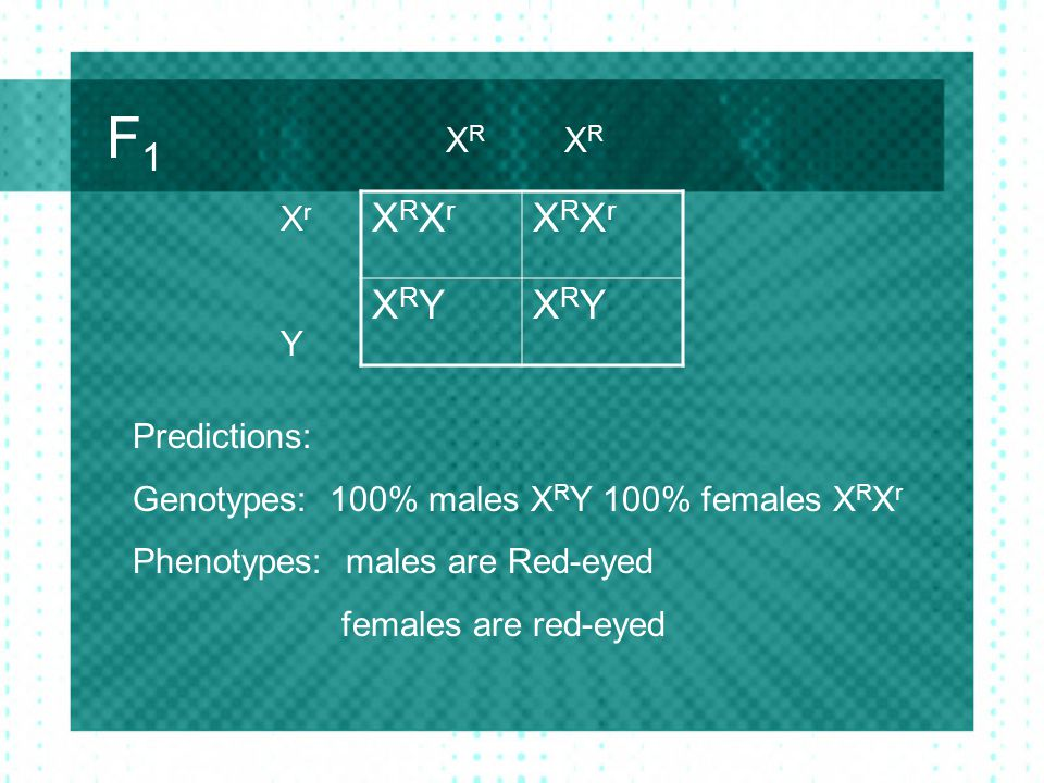 F1 XRXr XRY XR XR Xr Y Predictions: