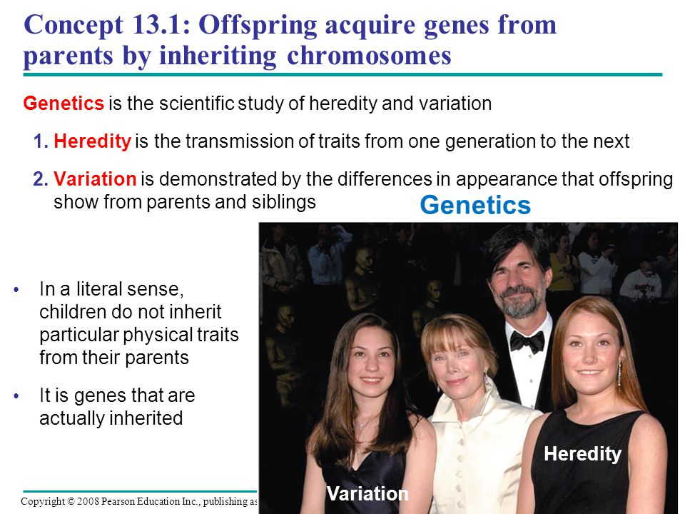 Concept 13.1: Offspring acquire genes from parents by inheriting chromosomes